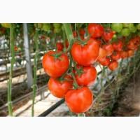 Куплю помидоры высшего сорта оптом