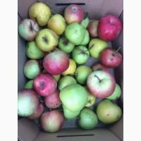 Продам яблоки на переработку (соки и джемы) из сада, Запорожская обл