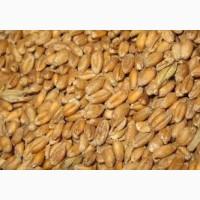 Пшеницу фуражную 6 класс.Самовывоз