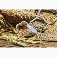 Куплю пшеницу, кукурузу, сою, сорго, лён, Киев