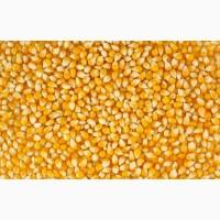 Куплю Кукурузу База
