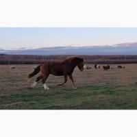Великий кінь