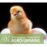 Продам Суточных цыплят бройлера. Гавриловка