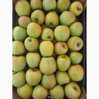 Продам яблоки Польские от поставщика