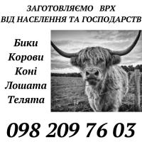 Закуповуємo ВРХ, Ружинський, Попільнянський, Андрушівський райони