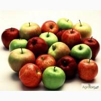 Предпрятие закупает яблоко на промпереработку ДОРОГО!Поможем с транспортом от 3-х тон