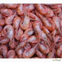 Креветка Черноморская очень вкусная Днепропетровск и живые раки