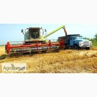 Продавцы кукурузы и пшеницы