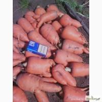 Продам морковь ( Абако) некондиция