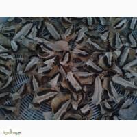 Продам лікувальну настоянку гриба Веселки і сухий гриб