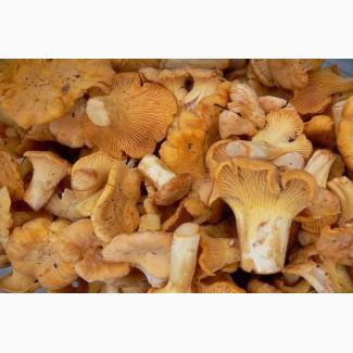 Замороженные грибы
