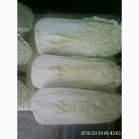 Продам капусту пекинскую. Товарную. ОПТ