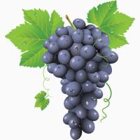Купим виноград технических сортов