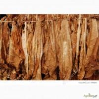 Продаємо сухе листя тютюну