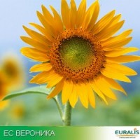 Семена подсолнечника ЕС ВЕРОНИКА (Евралис )