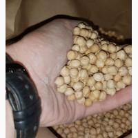Семена нута HOPE канадский ярый трансгенный сорт (элита)