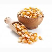 Закуповуємо кукурудзу у с/х виробників