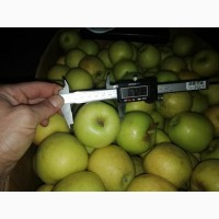 Продам яблоки Гольден