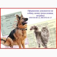 Срочно Оформление ветеринарных документов от 1 дня для котов, собак, Харьков