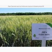 Продам семена озимой пшеницы Лира Одесская