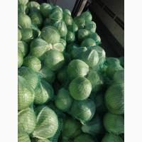 Продам товарную капусту от производителя