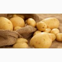 Продам Картоплю Оптом та в Роздріб