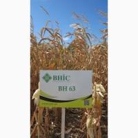 Семена кукурузы ВН 63 (ФАО 280) -10% скидки напрямую от производителя