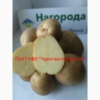Ранні сорти картоплі, продаж насіннєвої картоплі, еліта