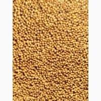 Продаем посевной материал горчицы желтой