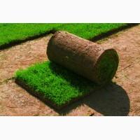 Укладка рулонного газона и установка систем автоматического полива