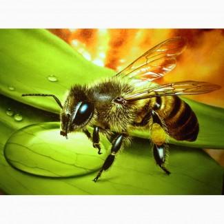 Продам бджолосім#039;ї, Суми