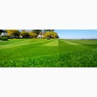 Продам травосмесь для газонов, Универсальная и Спортивная