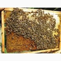 Пчелопакет, бджолопакет 4-рамки, карпатка 2019 Доставка в Мелитополь