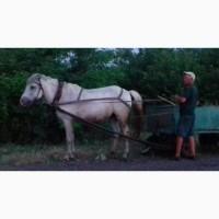 Продам робочую лошадь