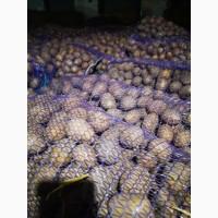 Продам насіневу картоплю Гранада, Королева Анна, Белороса, Коломбо, та інші сорти. 20т