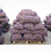 Продам картошку оптом и в розницу