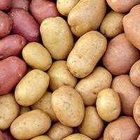 Покупаем картофель от 20 тонн по Черниговской области. Самовывоз