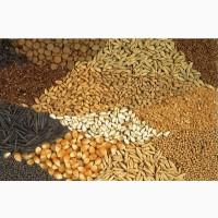 Кукуруза, пшеница, ячмень, рожь, овес, зерноотходы куплю