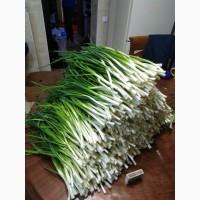 Лук перо, 30-40 кг.Насыпью, 100 грн кг.Запорожье