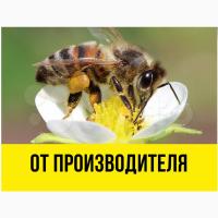 Пчеловодное фермерское хозяйство реализует пчелопакеты карпатка