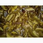 Продам гриб решітник