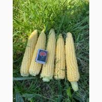 Кукурудза солодка струк Овочі в асортименті