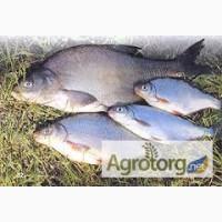 Рыбхоз реализует оптом охлажденную и свежемороженую рыбу
