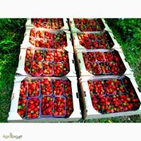 Лоток для Черешни, тара для черешни, ящик для фрукты, тара для ягод