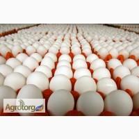 Яйца инкубационные 100% соответствие породам