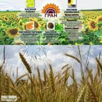 Продамо насіння спельти озимої Зоря України ( 280-290 дн)