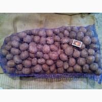 Продам картоплю посадкову