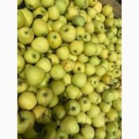 Более 200 т яблока в наличии