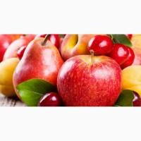 Закупка яблок и груш на опт