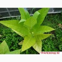 Продам семена табака- Вирджиния, Берли, Трапезонд_92, Махорка